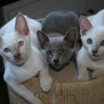 Yuri, Miti, Bini