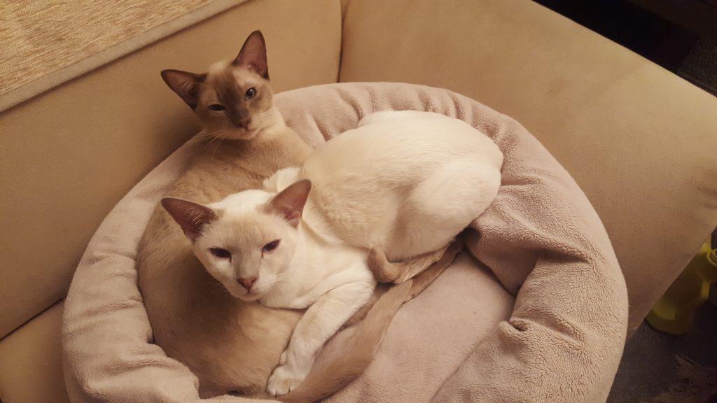Jambul mit Katzenkumpel Dioon