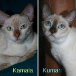 Kamala_Kumari
